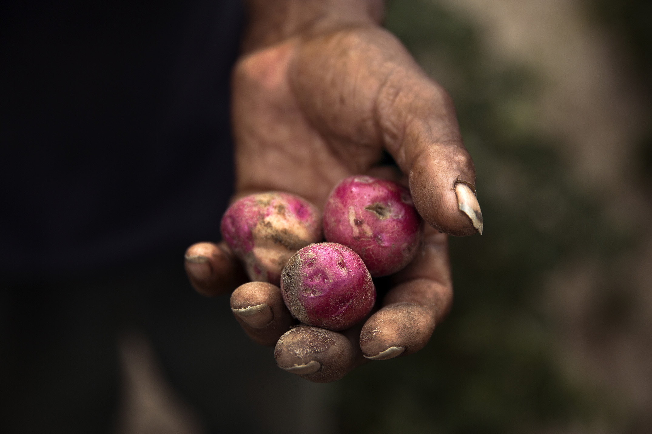 Mike Kane | Rural Georgia potato farmer | Seattle documentary, editorial, and commercial photography
