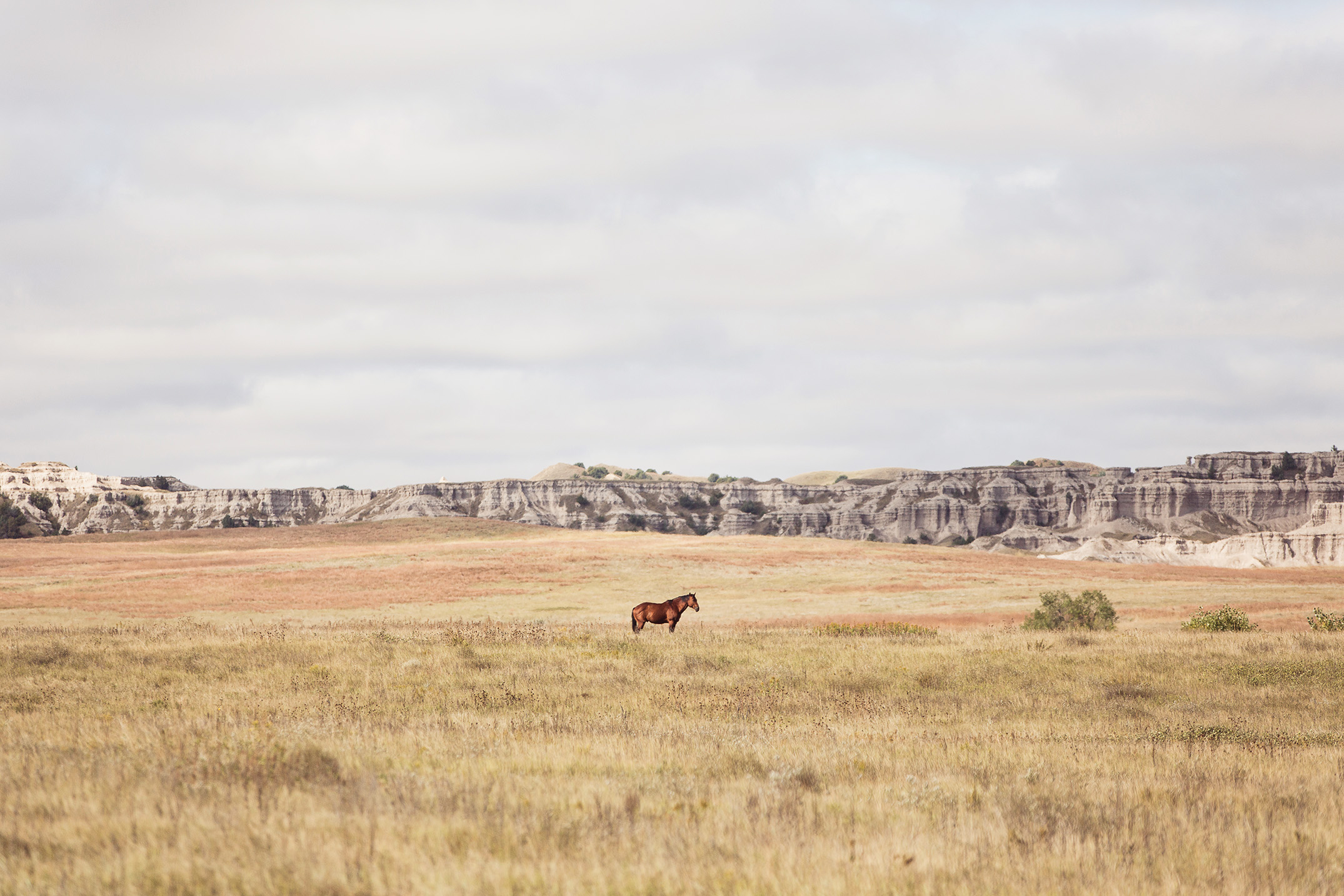 Mike Kane | Lone horse on the Pine Ridge Reservation in South Dakota | Seattle documentary, editorial, and commercial photography
